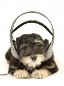 Puppy-listening-to-music-with-headphones